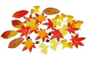 不織布の紅葉