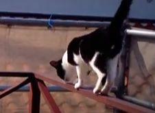 外壁塗装と猫