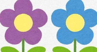 ボリジの花言葉の由来