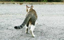 猫よけに漂白剤