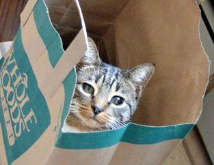 超音波式猫よけとペットの関係