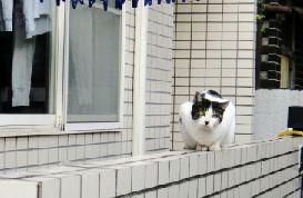 猫よけにガムテープ