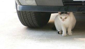 超音波式の猫よけと赤ちゃん
