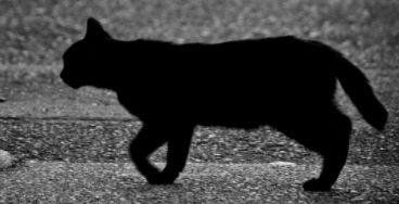 猫よけに防犯砂利