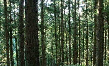 杉の人工林