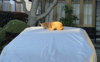 車のボンネットの猫よけ
