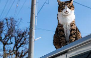 屋根の猫よけ