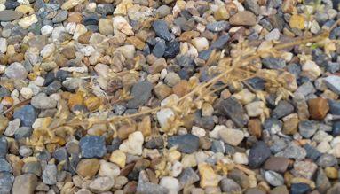 砂利の上から除草剤
