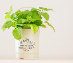 観葉植物がコバエの発生源