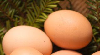 卵とボツリヌス菌