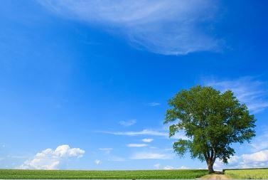 弓道で縦に伸びるとは木のように考えるべし