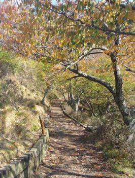 妙見山のエドヒガンの小径