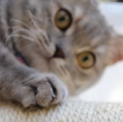 ホットカーペットで猫が爪とぎ