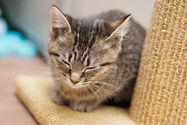 猫がホットカーペットで爪とぎする