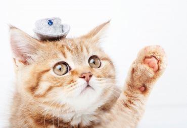 ホットカーペットで猫が爪とぎするのを予防
