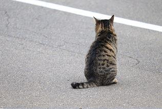 猫よけスプレーの効果と正しい使い方