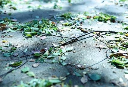 台風中のランニングは小枝が目に飛んできてケガするかもしれない